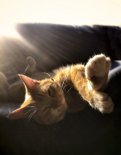 Well fed cat in a sunny room