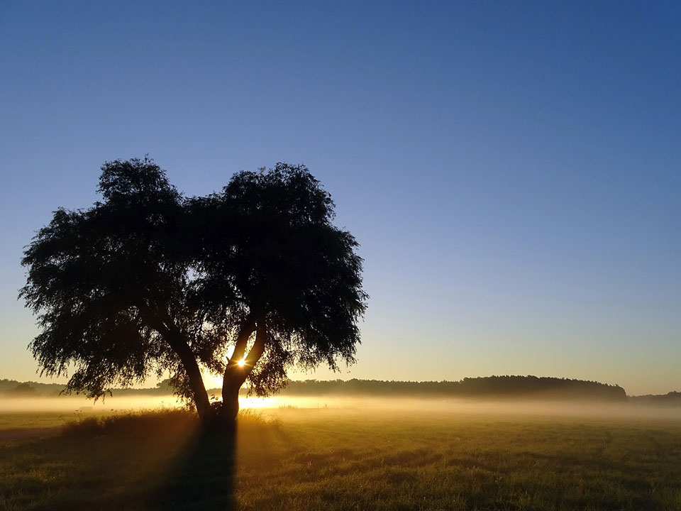 Sunrise with pinpoint of light through a tree