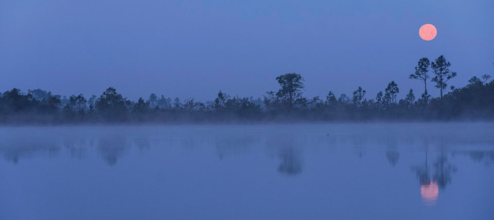 A pink moon rises from behind trees that edge a wetland at dusk.