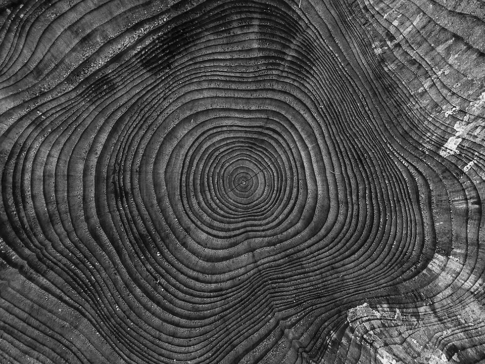 A black and white photograph from above of a tree's rings