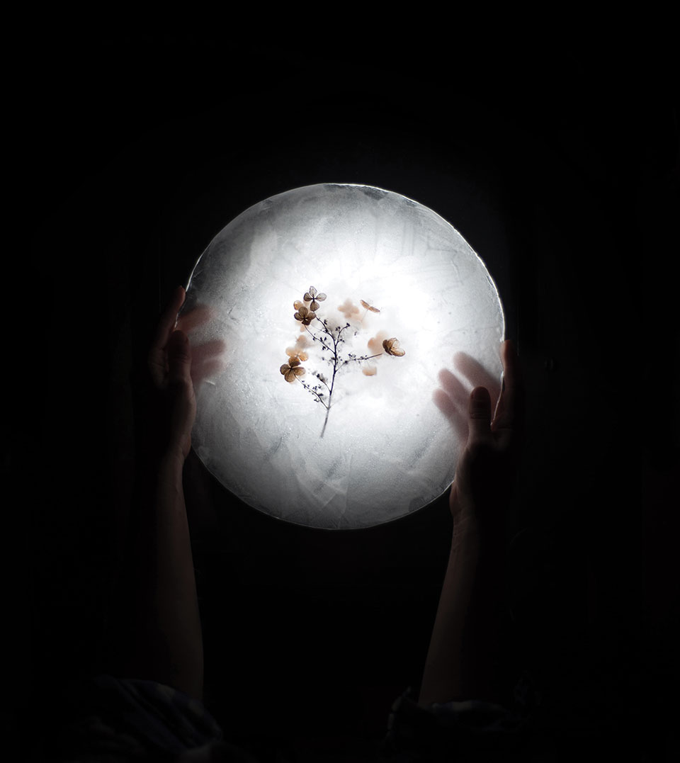 Dried hydrangeas as seen through a paper plate strongly lit from above. A pair of human hands hold the plate at the shadowy edges