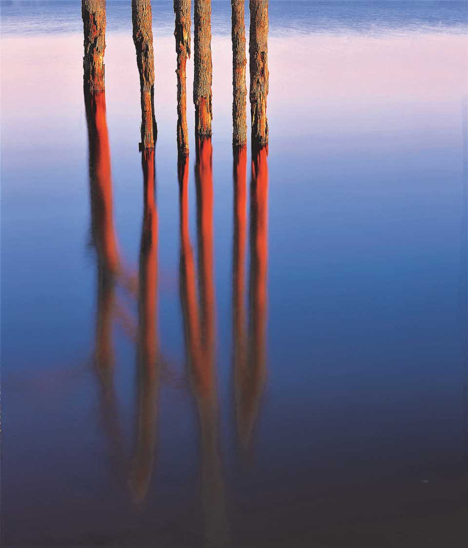 Trees arise out of a body of water, the bark peeled away on the trunks