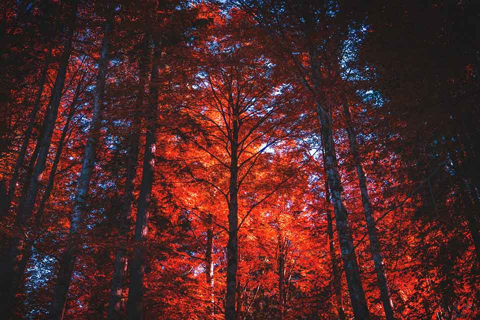 A photograph of a forest with the sun just barely coming through the canopy