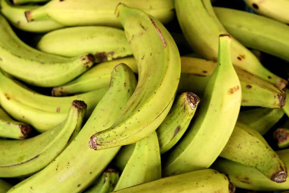 A photographic close-up of nearly ripe bananas