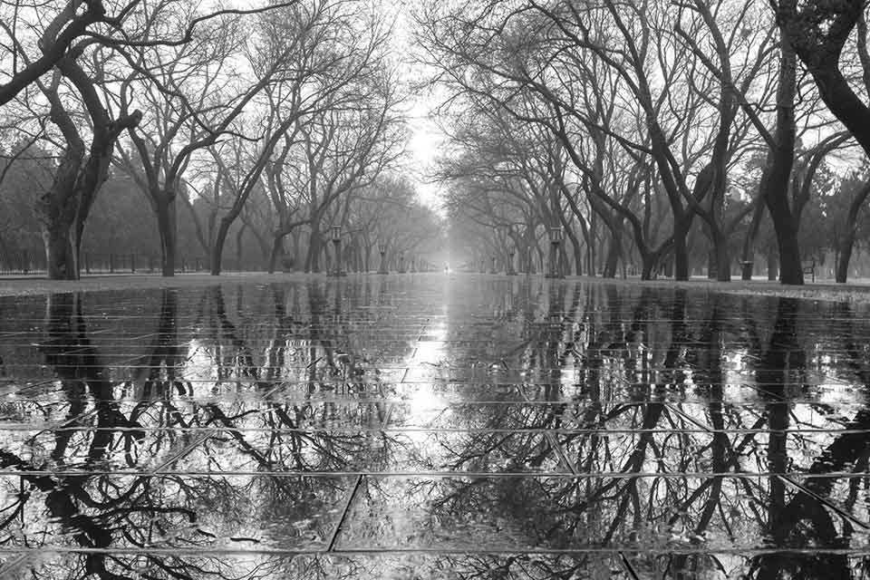 A black and white photograph of a forest rising up out of a body of water. The trees are mirrored in the water