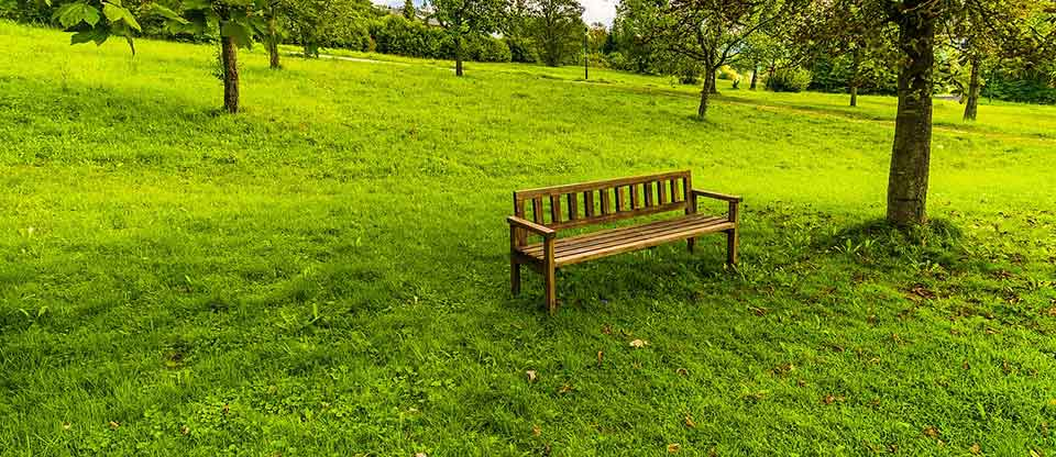 A photograph of a simple wooden bench sitting on a bright green sloping hill covered in grass with trees dotting the landscape in the backgroundf
