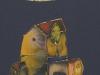 Bessarabian Stamps by Oleg Woolf