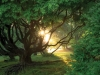 The rising sun peeking out from between the branches of a tree in a thick glade.