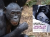A photograph of bonobo with the cover to Audrey Schulman's A Theory of Bastards inset