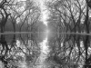 A black and white photograph of a forest bordering a water slick walkway. The trees are mirrored in the water