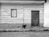 A dog stands expectantly in front of an aged dwelling