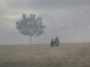 Two figures standing in a gauzy mist, holding hands with a lone tree looming ahead of them