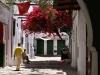 A picture of a secluded ancient city street where a tree loaded with red blooms sprouts from beside a stone building creating shade for those walking the street