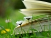 Open book in the grass
