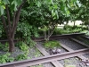 A garden grows up from within the rails of an abandoned train line