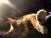 Cat sitting in sunlight