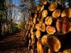 "Gillie Rhodes, ""Log pile,"" November 7, 2009"