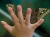 A child's hand pressed up against glass with a moth perched on the other side