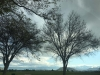 A photograph of bare trees against a cloudy sky