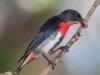 "Geoff Whalan, ""Mistletoe Bird (Diaceum hirundinaceum),"" Fogg Dam Conservation Reserve, Middle Point, Northern Territory, Australia, November 8, 2015"