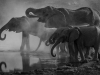 A black and white photo of elephants trumpeting at the edge of a water source