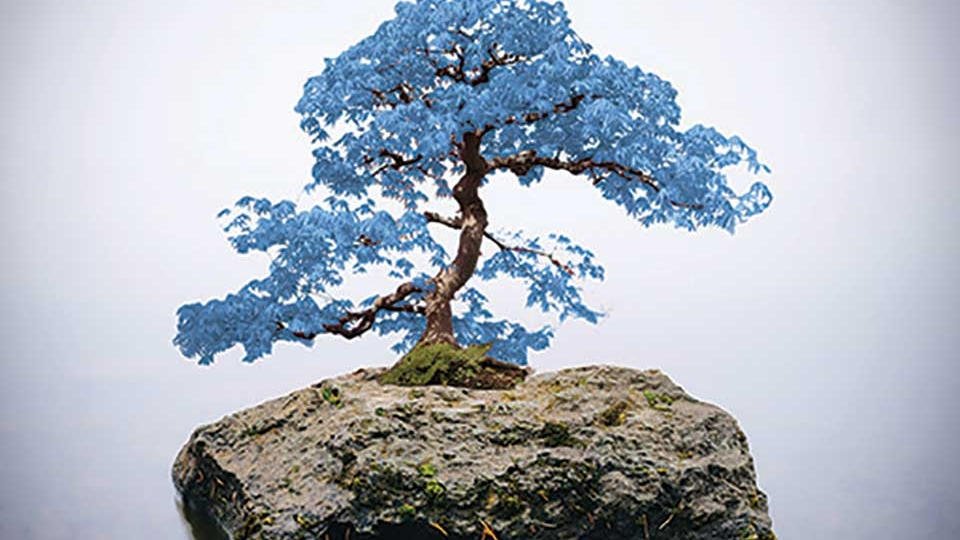 A photograph of a blue bonsai on a rock emerging from the water and surrounded by fog