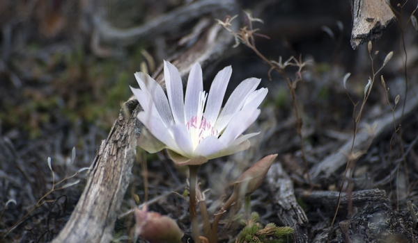 A wildflower sprouts from a mossy forest floor