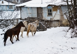 Three horses saunter up to a house covered in snow.
