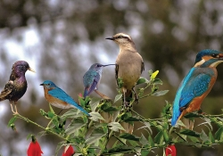 Five birds perched on a rose bush
