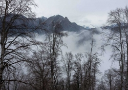Mist rises above a forest at the foothills of a mountain range