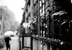 A black and white photo of flowers entangled in barbed wire with a cityscape out of focus in the background