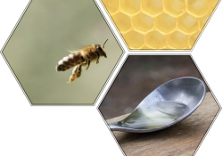Images of a honey bee, a honey comb, and a spoon inside of hexagonal frames