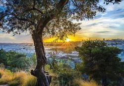 A photograph of a city in the distance beneath a rising sun. A tree dominates the foreground