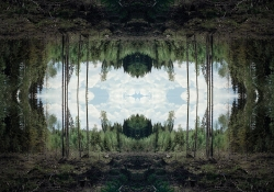 A digitally altered photograph showing a forest clearing with the image reversed atop the original image