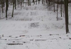 A forest with snow on the ground. Steps can just be seen through the snow