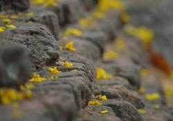 A close up photograph of stone steps, covered in yellow lichen