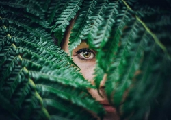 A human eye peers from the gap between numerous overlapping fern fronds