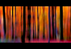 Darkened vertical structures rise gauzily up against a orange-purplish background