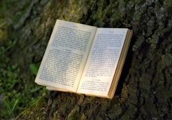 Book under a tree