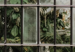 A photograph of plants seen through a bay of small windows. One window is fogged up