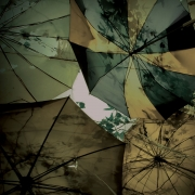 Umbrellas and leaves